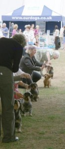 Wirehairs on show (Sue in front)