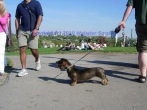 primrose-hill-dog-1