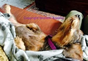 Dogs dont sleep upside down comp